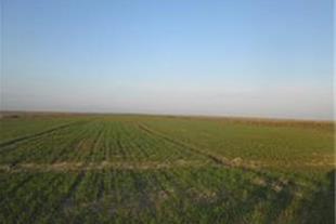 فروش زمین کشاورزی 120 هکتاری در مازندران - 1