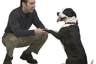 پانسیون سگ , نگهداری آموزش تربیت سگ , پرورش سگ