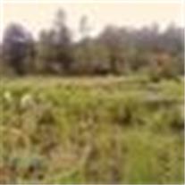 فروش زمین کشاورزی