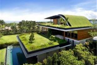 شرکت سایه گستره بام آسیا بام و دیوار سبز green roo