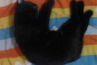 پذیرش گربه خانگی