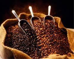 فروش عمده پودر قهوه - 1