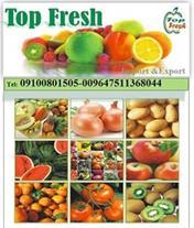 صادرات میوه از شمال به عراق روسیه