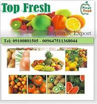 صادرات میوه از جنوب ایران به عراق