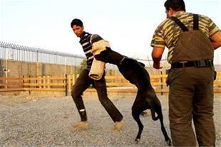برگزاری کلاسهای رفع ناهنجاری سگ