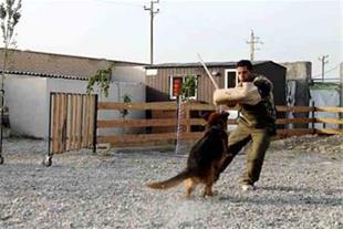 فروش سگهای آموزش دیده گارد و نگهبان