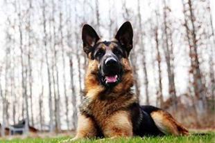فروش لوازم کمک آموزش سگ
