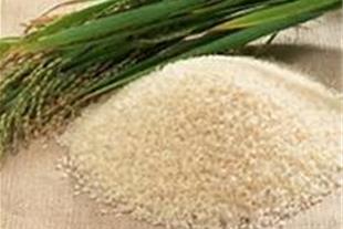 فروش برنج طارم و هاشمی درجه یک ( کلی و جزئی )