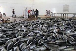 فروش استثنایی کارخانه تن ماهی چابهار فانوس دریا