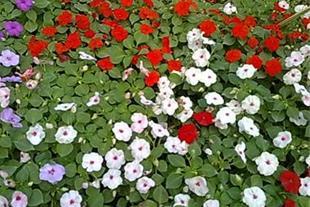 تولید کننده انواع گیاهان و درختان giahiran.com