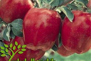 نهال سیب سبز و قرمز فرانسه
