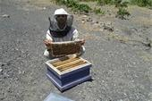 عسل فیض آبادی