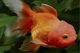 ماهی های زینتی.پرندگان خانگی