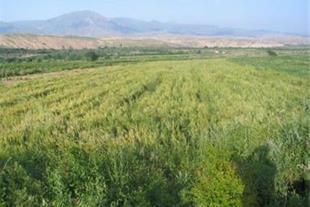فروش 5 هکتار زمین  کلنگی در صوفیان