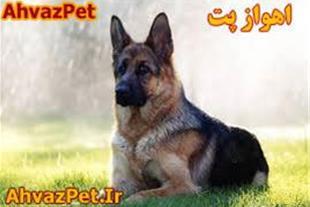 فروش انواع سگ های نگهبان