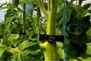 فروش انواع تجهیزات مدرن گلخانه ای