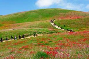 اجاره خانه مبله به مسافران در مشهد