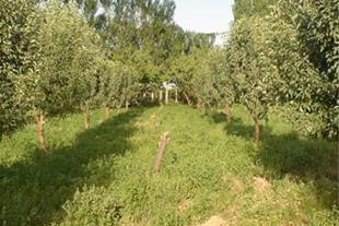 فروش باغ 2500 متری در موقعیت عالی زنجان