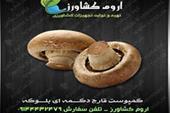 فروش بذر و کمپوست آماده قارچ خوراکی