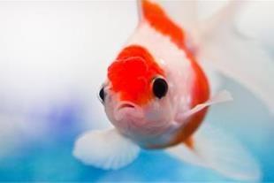 فروش انواع آکواریوم و ماهی های زینتی
