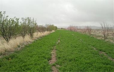 فروش زمین کشاورزی - 1
