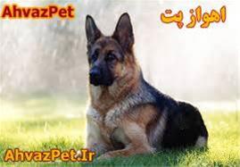 فروش انواع سگ های نگهبان - 1