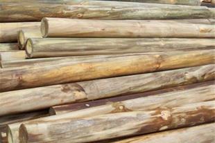 تولید چوب نما توسط راکتور اشباع