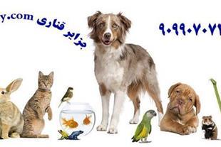 مشاوره تلفنی پرندگان زینتی