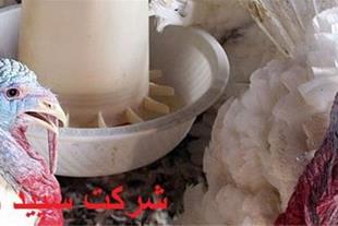 جیره نویسی تخصصی برای بوقلمون گوشتی وشتر مرغ