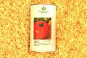 فروش بذر گوجه رویال با واریته جینا
