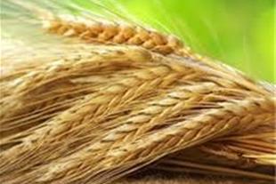 فروش گاوداری صنعتی با زمین کشاورزی