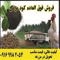 فروش  روزانه کود مرغی