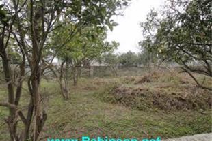 فروش باغ مرکبات در شمال محمودآباد