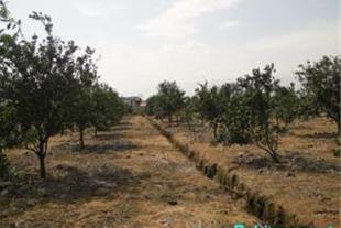 فروش باغ در محمودآباد- کلوده - 1