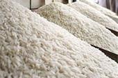 انواع برنج تارم ایرانی درجه یک و خالص