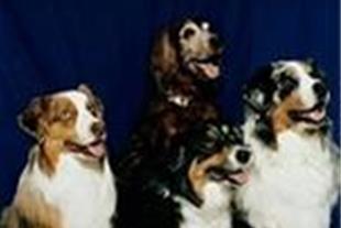 کلینیک دامپزشکی آبادیس مخصوص حیوانات خانگی - 1