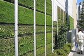 فضای سبز عمودی ، اجرای فضای سبز
