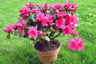 فروش انواع گل و گیاه زینتی ، فروش کود و سم