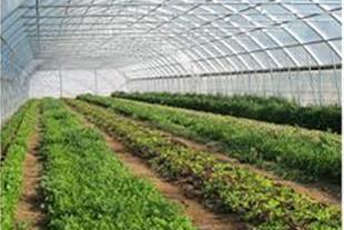 فروش زمین گلخانه ای در فتح آباد نظرآباد