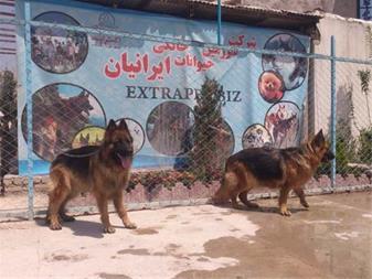 تنها فروشگاه تخصصی راتویلر در ایران - 1