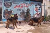 تنها فروشگاه تخصصی راتویلر در ایران