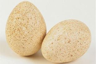فروش تخم نطفه دار بوقلمون