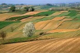 فروش زمین کشاورزی 9 هکتاری در نظرآباد