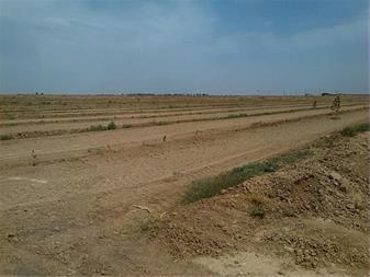 فروش زمین 12 هکتاری با چاه مجوز دار در آبیک قزوین - 1