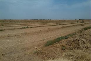 فروش زمین 12 هکتاری با چاه مجوز دار در آبیک قزوین