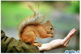 سنجابهای 1.5 تا 8 ماهه کانادایی