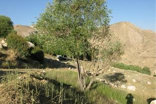 زمین  33 و 130 هکتاری با سند و آب در فیروزکوه