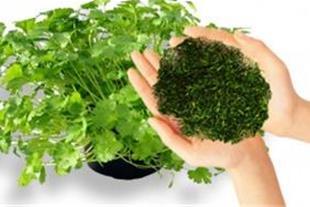 صادرات سبزیجات خشک به امریکا