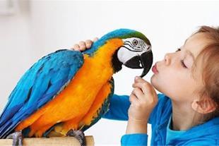 کلینیک دامپزشکی اختصاصی پرندگان آرا