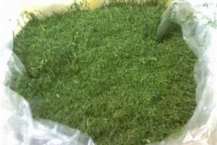 فروش سبزیجات خشک صادراتی